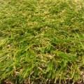 cardiff grass 2