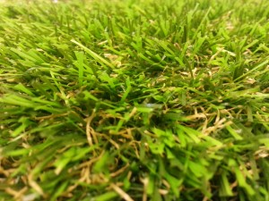 coity_Grass-300x225